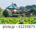 蓮 花 上野恩賜公園の写真 42250673
