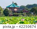 蓮 花 上野恩賜公園の写真 42250674