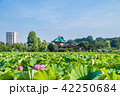 上野恩賜公園 不忍池 蓮の写真 42250684