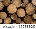Wood log texture of wooden tree trunks 42253325