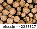 Wood log pile background for lumber industry 42253327