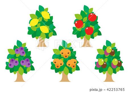 果物の木 42253765