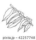 コーヒー プランツ 植物のイラスト 42257748