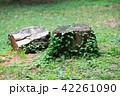 森の中の切り株 42261090