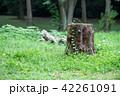 森の中の切り株 42261091