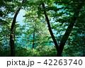 青木湖 湖 湖畔の写真 42263740