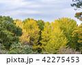 黄葉 木々 秋の写真 42275453