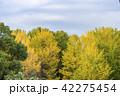 黄葉 木々 秋の写真 42275454