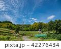 奈良県 明日香 初秋の里山 彼岸花と田んぼ 案山子ロード 42276434