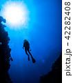 シルエット ダイバー 海の写真 42282408