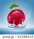 プラム 梅 うめのイラスト 42288418