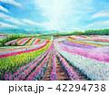 富良野 お花畑 サルビア ラベンダー 富田農園 42294738