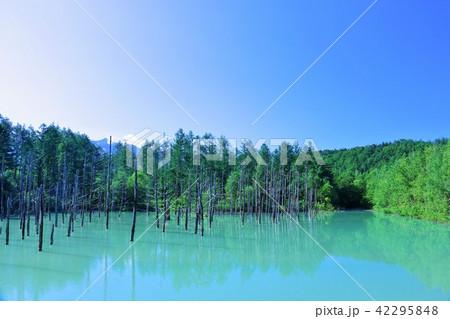 北海道 青空と青い池 42295848