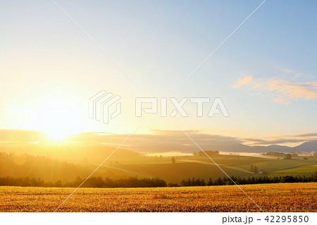 北海道 夜明けの太陽と美瑛の大地 42295850