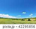 晴れ 北海道 美瑛の写真 42295856