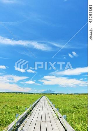 北海道 青空のサロベツ原野と利尻富士 42295861