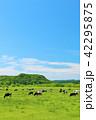 青空 北海道 大地の写真 42295875