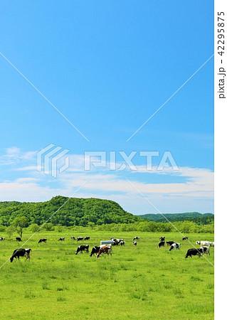 北海道 青空と大地と牛 42295875