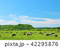 青空 大地 牛の写真 42295876