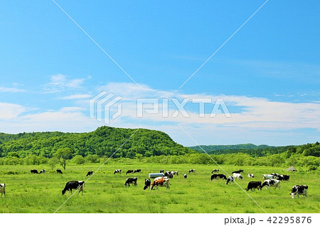 北海道 青空と大地と牛 42295876