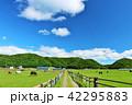 青空 北海道 サラブレッドの写真 42295883