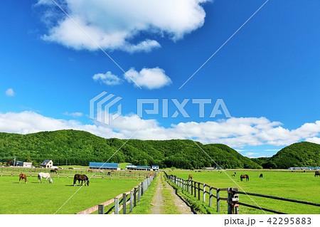 北海道 青空のサラブレッド牧場 42295883