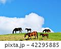青空 雲 馬の写真 42295885
