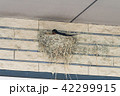 ツバメの巣 42299915