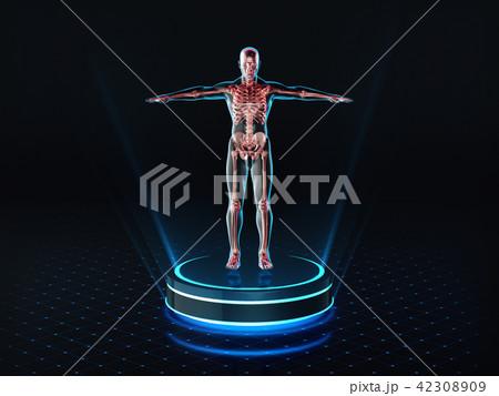Hologram Man anatomy and skeleton on pedestal.  42308909
