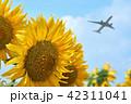 向日葵 ひまわり 飛行機の写真 42311041