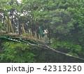 秋雨に降られる吊り橋 42313250