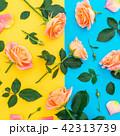 背景 花 お花の写真 42313739