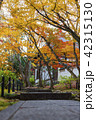 京都 紅葉 秋の写真 42315130
