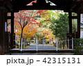 京都 紅葉 秋の写真 42315131