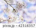 桜 さくら 42316357