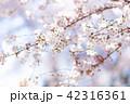 桜 さくら 42316361