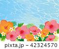 ハイビスカス リゾート 夏のイラスト 42324570