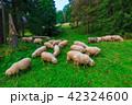 動物 まきば 牧草地の写真 42324600