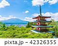 新倉山浅間公園 五重塔 富士山の写真 42326355