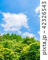 山 森林 新緑の写真 42326543