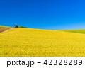 北海道 美瑛 風景の写真 42328289