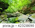 栃木県矢板市 緑と沢の流れ(6月) 42328690