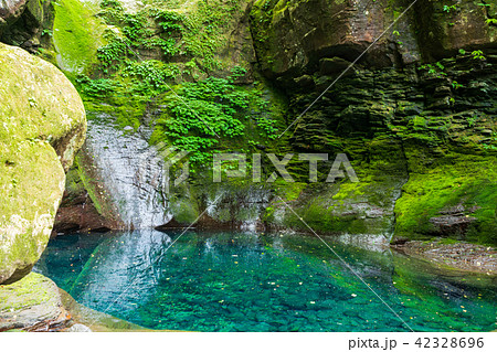 栃木県矢板市 おしらじの滝(6月) 滝の水なし 42328696