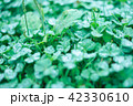 rain grass 42330610