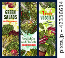 サラダ サラダ 野菜のイラスト 42336634