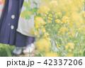 Sakura 42337206