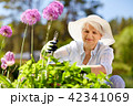 senior woman with garden pruner and allium flowers 42341069