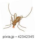 蚊に注意 血を吸っているアカイエカ ヒトスジシマカ ヤブカ 42342345
