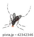 蚊に注意 血を吸っているヒトスジシマカ アカイエカ ヤブカ 42342346