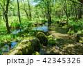 自然 風景 森の写真 42345326